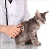 Ветеринарные клиники в Айкино
